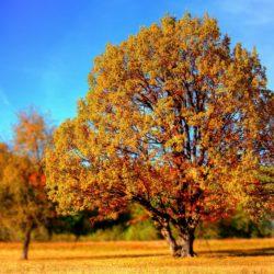 Reiterhof-Herbstferien